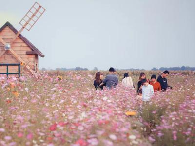 潍坊的秋天里,我在粉黛花海等你