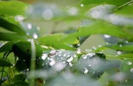 今年汛期淄博市累计降水520毫米