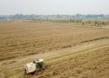 从田间到社区,探索直购模式!泰安汶阳田百亩旱稻种植地喜获丰收
