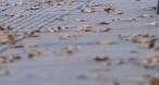 新一轮雨水即将登场!16日夜间青岛北部地区最低温将跌至5℃