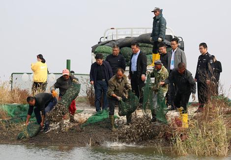 433万只大闸蟹苗种放流黄河口