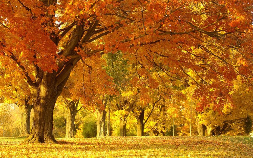 咳咳咳……秋季为何易咽喉不适?护嗓攻略来一份!