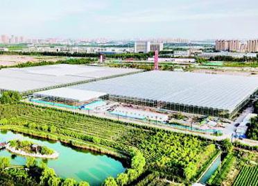 喜看稻菽千重浪,潍坊国家农综区以融合发展打造农业产业化升级版