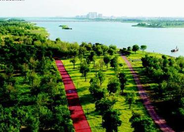 绿色鸢都 生态潍坊丨潍坊市国家森林城市建设工作纪实