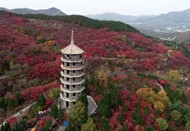 Vlog | 登高望秋色 与孔雀共舞 在红叶谷感受自然和谐