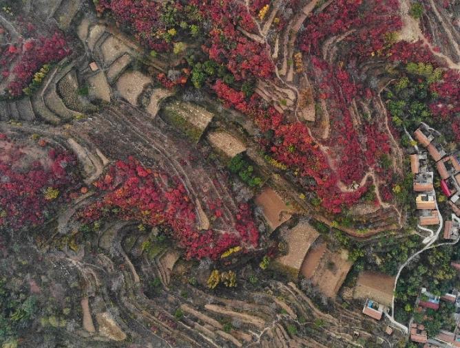 济南:斑斓秋色入画来
