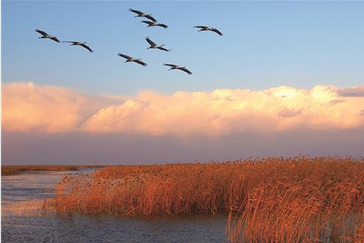"""贯彻黄河流域生态保护和高质量发展座谈会精神的""""东营实践"""""""