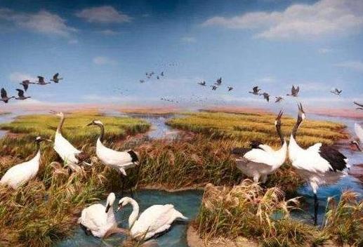 黄河三角洲鸟类博物馆被命名为东营市社会科学普及教育基地
