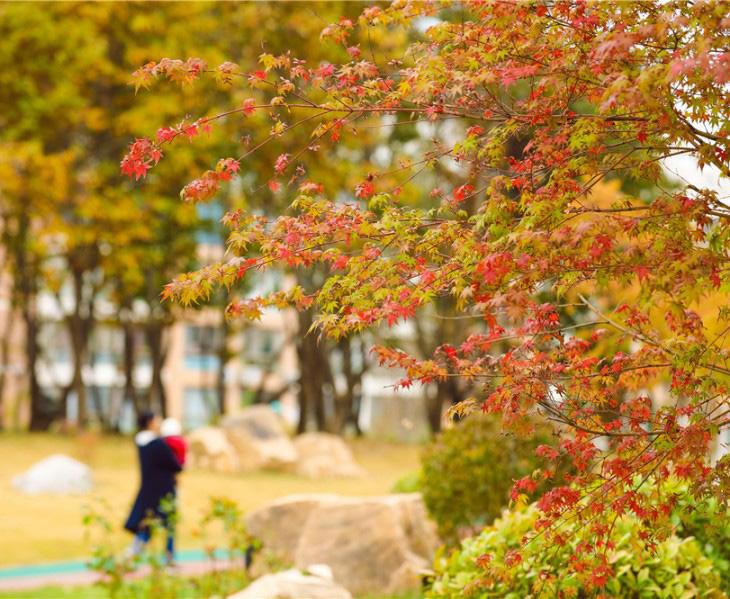 跟着镜头来赏秋