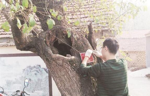 淄博市古树集体更换身份证