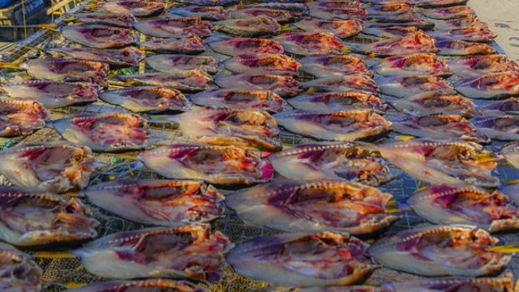 港东渔码头 又迎来了一年中晒鱼的好季节