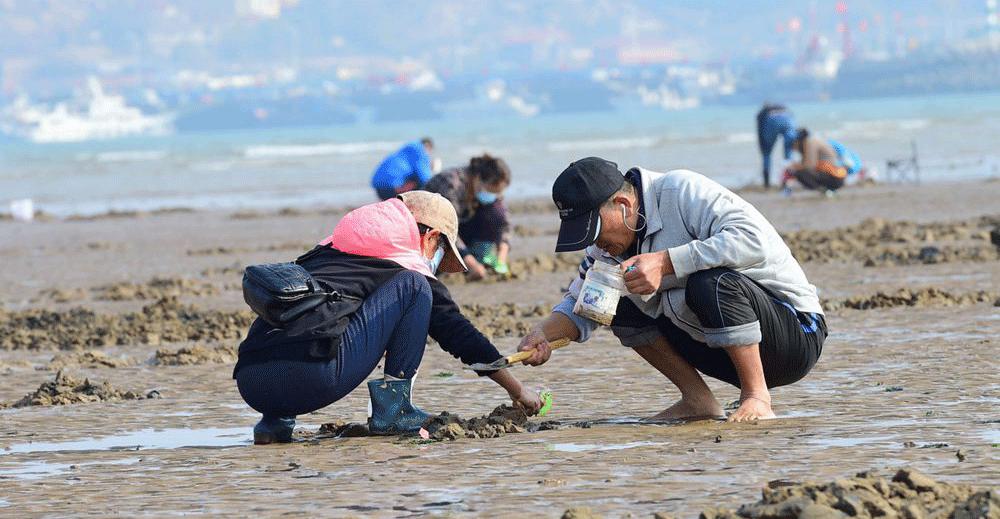 又是一个大潮日 市民游客沙子口海滩赶海忙