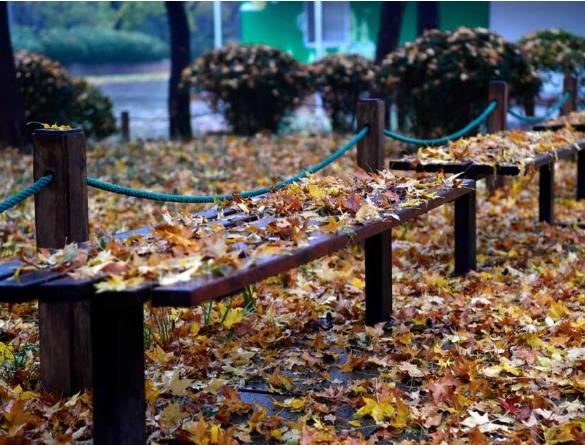 影像力|多少种落叶,才承包了济南醉美的初冬?