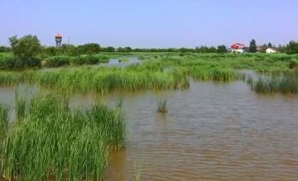 桓台持续推进生态水系建设 让城乡群众享受生态改善带来红利