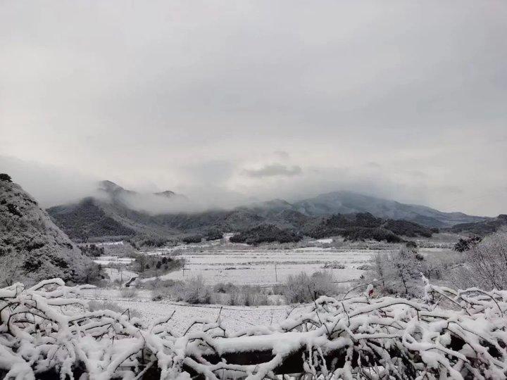 泰山下雪啦!山顶多图带你看雪景!