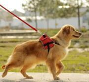 淄博将立法规范养犬行为向社会公开征求意见  限养区每户限养一只犬