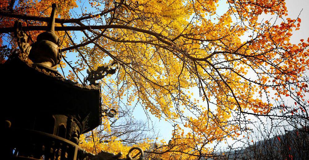 崂山深处太清宫 景色还是好个秋