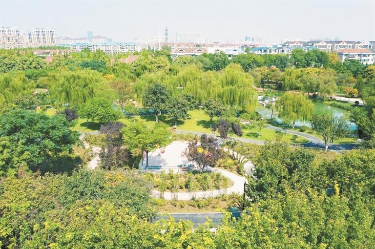 淄博数十条道路两侧裸露土地成带状公园
