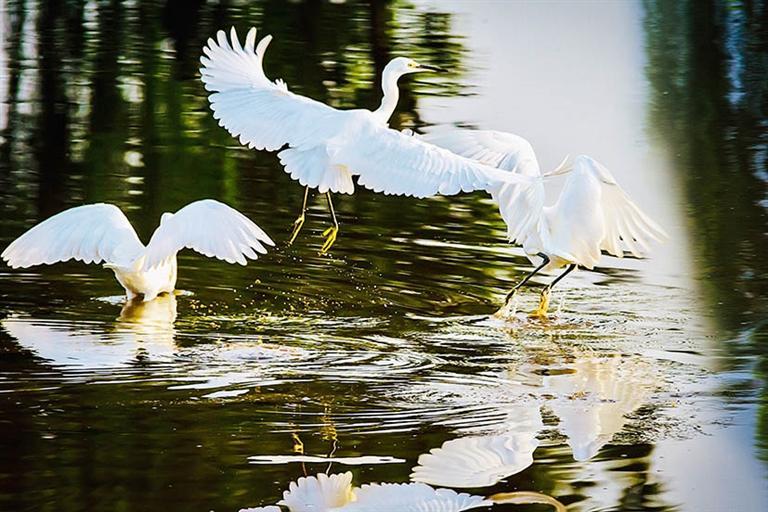 淄博水生态环境质量持续改善 鹭鸟游鱼戏清波