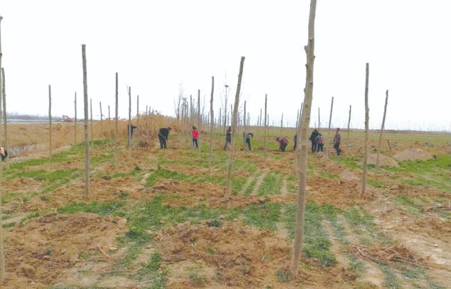 聊城开发区扎实推进林长制 生态社会效益双丰收