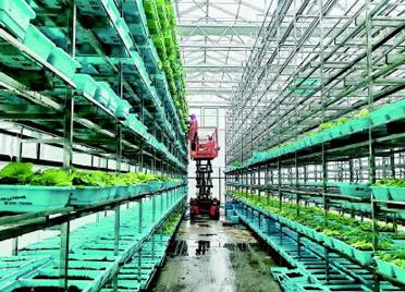 潍坊玉泉洼:蔬菜种植立体化 一年收获16茬