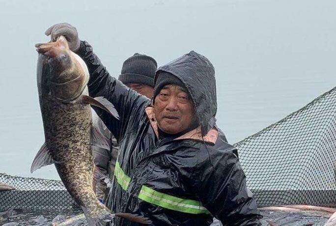 最大一条35斤!淄博文昌湖区捕鱼季开启