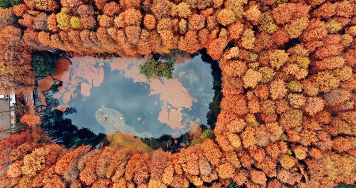 湖北武汉:初冬东湖