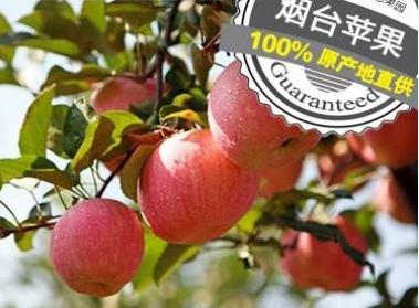 烟台苹果品牌价值突破145.05亿