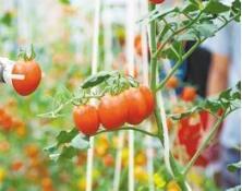 带动农民增收!淄博市再添4处市级现代农业产业园