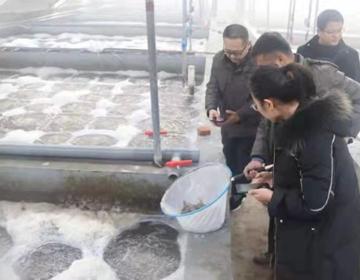 无棣县南美白对虾反季节养殖产量高效益好