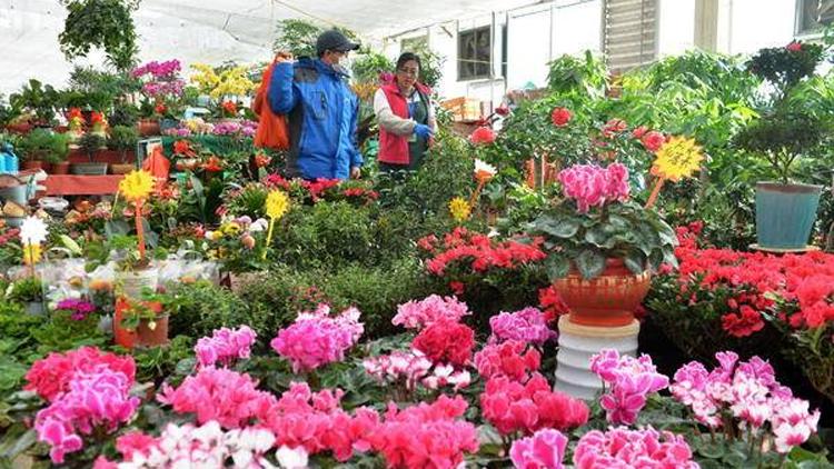 春节临近,青岛花卉市场又热闹起来了!