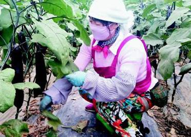 潍坊寒亭区:放大绿色生态优势 打造特色产业增长极