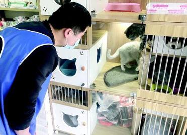 山东潍坊:春节寄养宠物 今年明显冷清