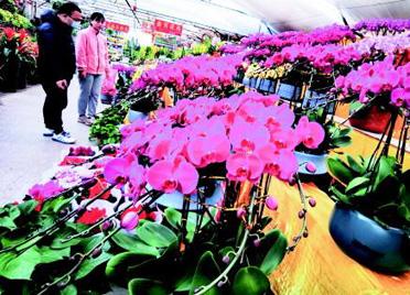 春节临近鲜花俏 潍坊花卉销售逐渐升温