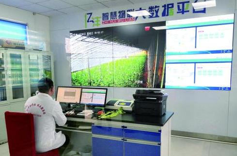 科技创新为乡村产业振兴添动力 聊城拥抱智慧农业的春天
