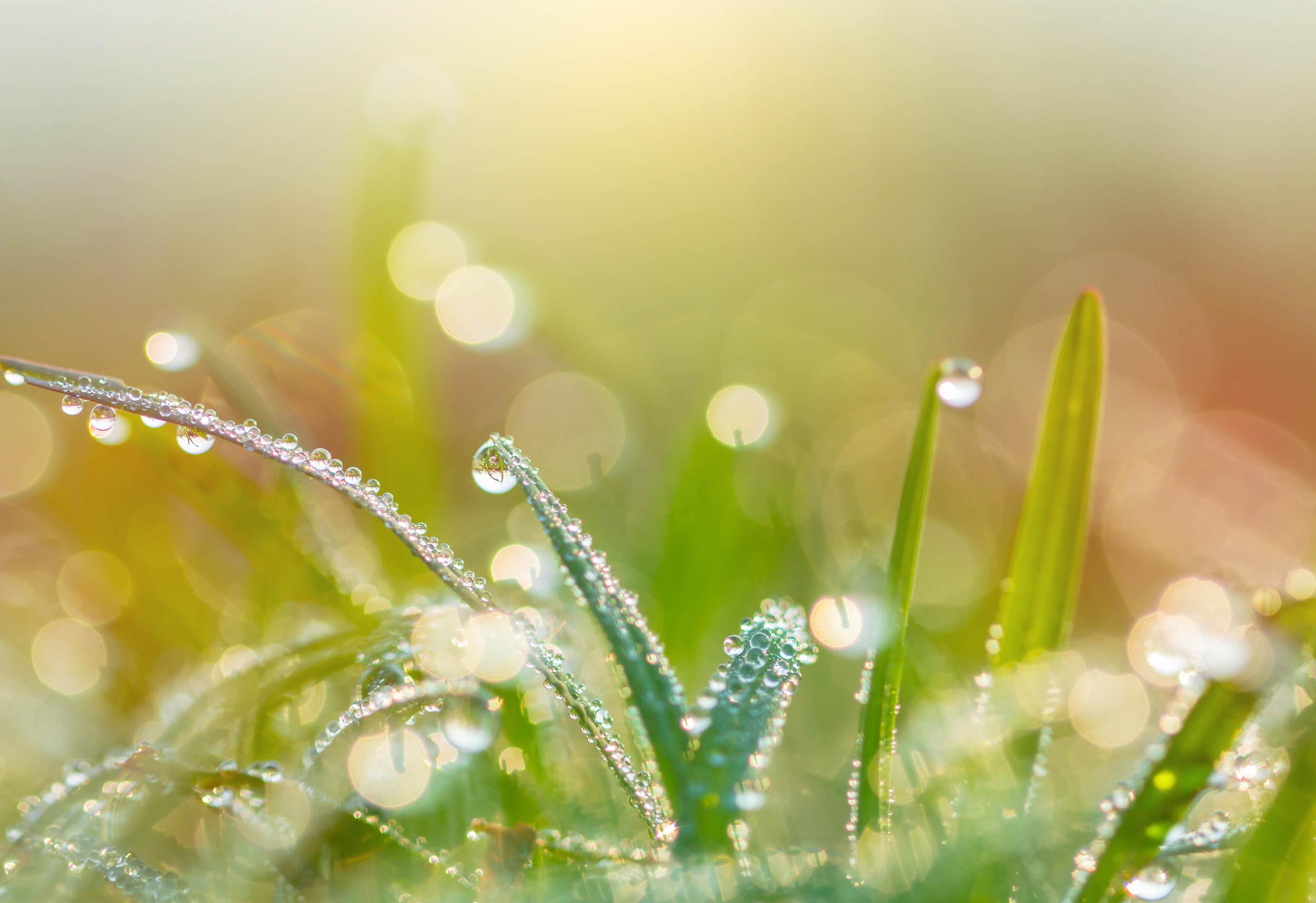 雨水时节 气温回暖雨量渐增 养生要调脾胃防流感