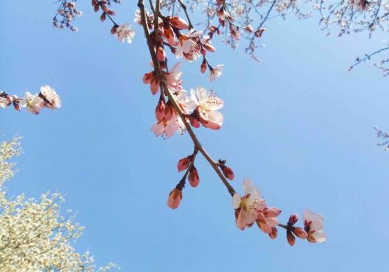 组图|春暖花开!济南泉城公园玉兰花开杨柳吐绿