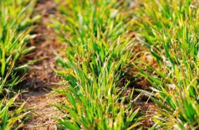 寒潮来袭气温断崖式下降 淄博紧急启动农业安全生产风险隐患排查