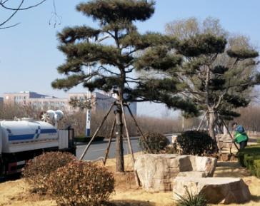 生态滨州!黄河八路渤海二十一路以西绿地提升项目竣工