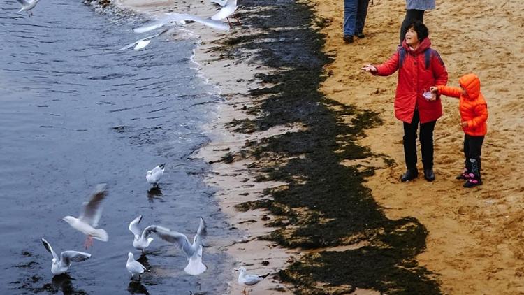 与海鸥相伴 冬日充满趣味