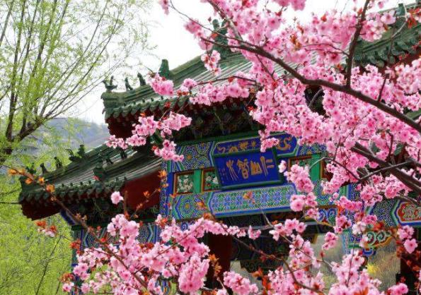 上万株梅花竞相开放 济南红叶谷植树赏花两不误