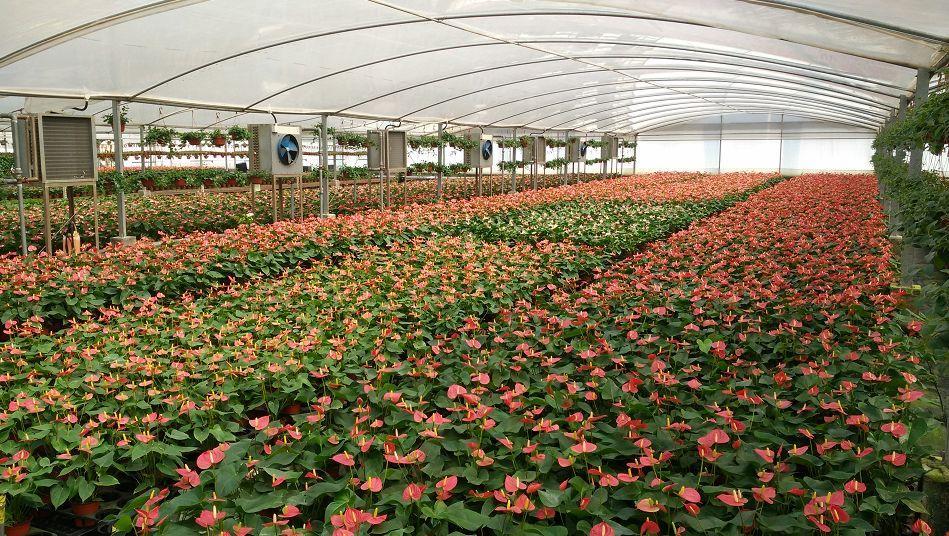 花卉产业恢复迅速 鲜花消费每逢佳节必爆单如何破局?