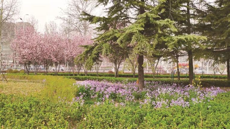 淄博中心城区6条花海观光大道绵延66.2公里