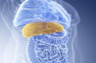 吃素也会得脂肪肝?