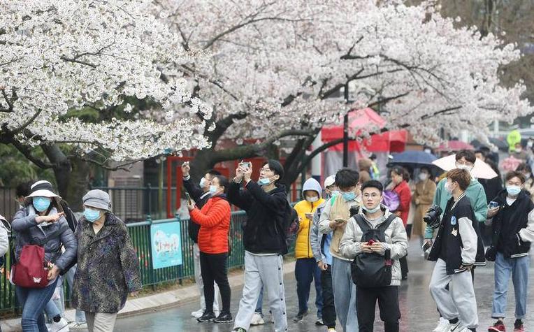 青岛樱花节打卡热,中山公园假期首日纳客6万余人次