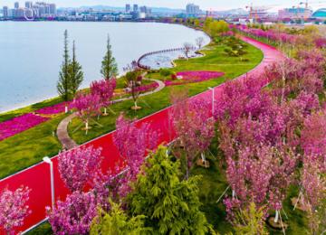 2021年威海樱花观赏地图请收好