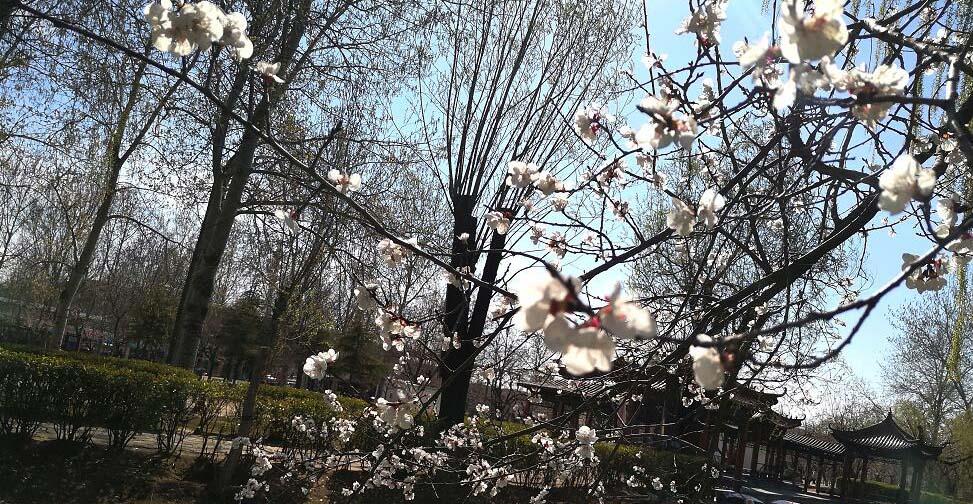 聊城:捕捉春天的美好