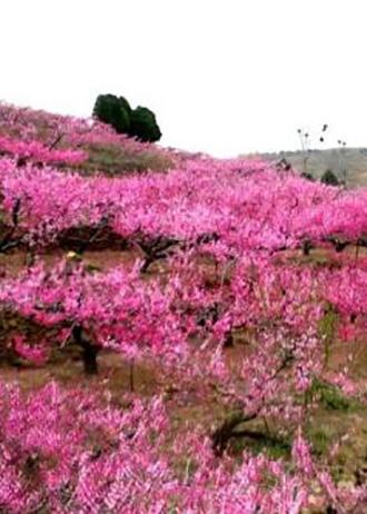 人間四月天花開正當時 盤點山東春日賞花打卡地