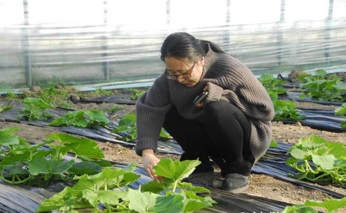 """从上海写字楼到广饶大棚地 刘超返乡逐梦""""关心粮食和蔬菜"""""""
