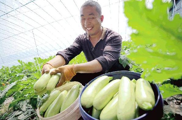 """广饶稻庄镇:打在""""新优奇特""""淄水现代农业产业园"""